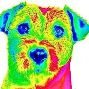 Fun4dogz Hondentraining en Hondenmassage logo