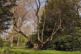 Verkoelende bomen voor Zaanse basisscholen