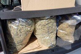 Forse hoeveelheid hennep gevonden bij inval woonwagenkamp Zaandam: twee aanhoudingen