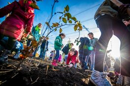 Zaanstad is partnergemeente Tiny Forest