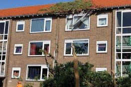 Boom op wooncomplex Krommenie