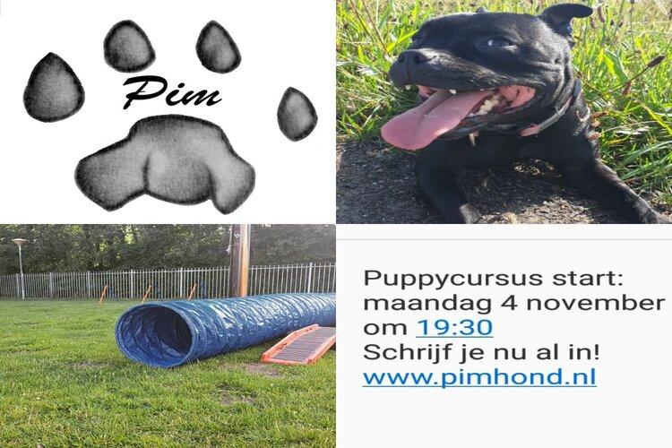 Nieuwe puppyinstroom bij Pim Hondenopvoeding