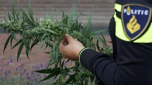 Wormerveerder (38) aangehouden bij inval hennepplantage in Breda