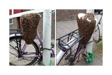 Vliegend volkje bezet 'bij-zondere' fiets in Zaandam