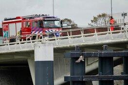 Meeuw vast met poot aan brug in Zaandam