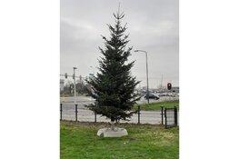 Verlichte kerstbomen verspreid over verschillende plekken in de stad