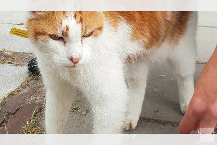 Gewonde kat aangetroffen: getuigen gezocht