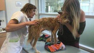 Hondje Skye na maand gewond en vermagerd teruggevonden