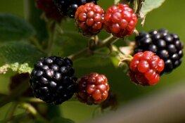 Ontdek, ruik en proef de eetbare planten van het Ilperveld